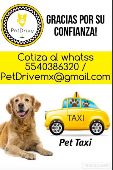 Pet Taxi.png